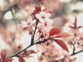 late bloomer by minginc