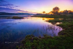 Morning Glory by deMinegraphy