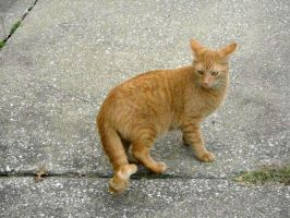 Cat Stock 31 by Orangen-Stock