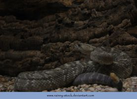 Rattle Snake- Stock by Rainny-Stock