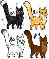 Point adopts - Cats by Dominoluv