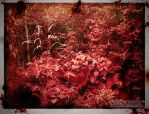 Red Forest by MARCOSVFG