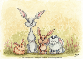 Rabbits by Ilona-S
