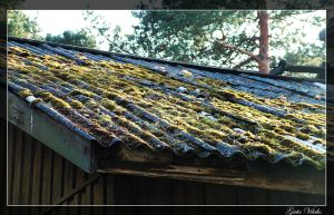 Moss on Old Roof by gatis-vilaks