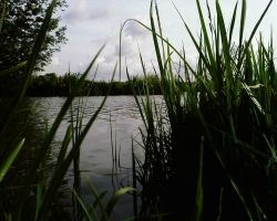 grass and water by priesteres-stock