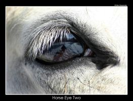 Horse Eye Two by UnUnPentium115