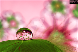 Flowerdrop by Irrence