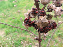 Lots of bugs hanging like fruits from a plant by n3storm