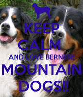 Keep Calm And Love Bernese Mountain Dogs by Winterthedolphin32