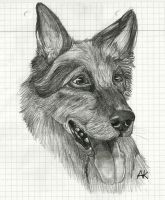 German Shephard .:Real Dog:. by BlueSpiritWolf6