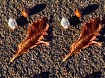 Emblems Of Autumn No.1 Paper Cutout Stereo Version by aegiandyad
