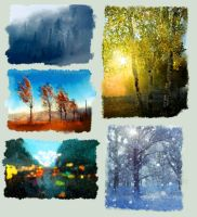 Five Weathers by Avalaa