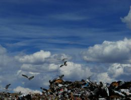 Garbage and  Gulls by PamplemousseCeil