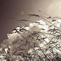 Summer Sky in sepia by mirop