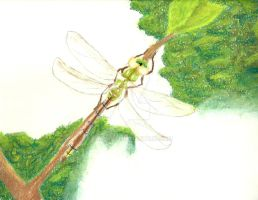 Dragonfly by Chalax91