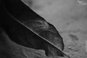 The Leaf by MayronWF