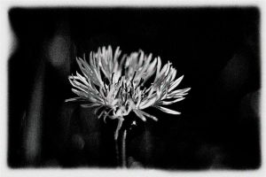 blue in mono by awjay