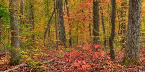 Colors of the Forest by RyanHeffron