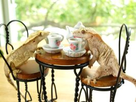 Gecko Tea Party - Closeup by styx-leagon