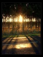 shadows of the sun.. by cdaile
