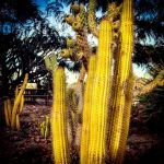 We All Live in a Yellow Cactus by Izzie-Hill