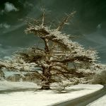 A Secret Life Of Ghost Trees.. by Dave-Ellis