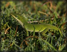 Green Anole 40D0027077 by Cristian-M
