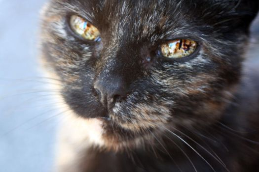 Majestic eyes of the cat by Neioo