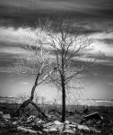 Burnt tree by gpmcguire