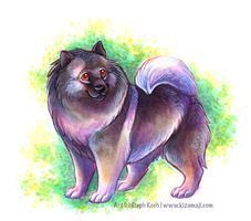Keeshond by bawky