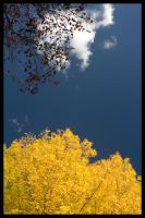 The Two Colours of Autumn by jawg1982