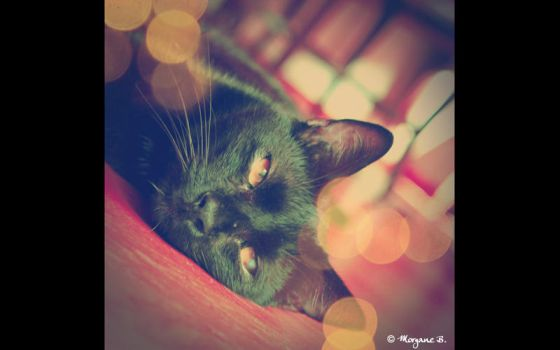 my vintage cat by moem-photography