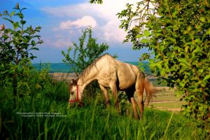Horse by andreiciungan