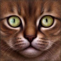 Your Everyday Warrior Cat by Wynnyelle