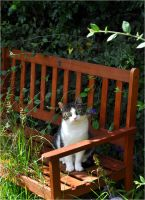 The Cat on the Bench by Forestina-Fotos