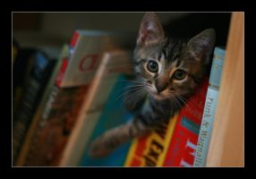 Kittens and Books by boz88xj