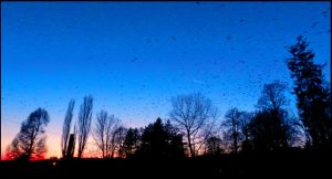 Crows in the nightsky by yvonne-marry