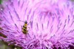 Thistle lover by TomKilbane