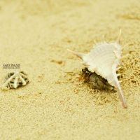Shell by EmilieDurand