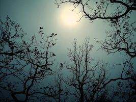 Stock 124 by UmbraDeNoapte-Stock