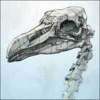 Bird skull by Nicoll