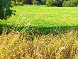 Green Pasture by GraceDoragon