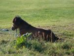 Horses - 165 by psychotherien-stocks