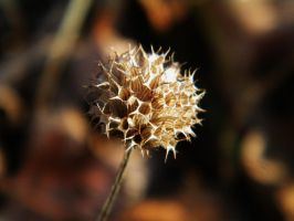 Dried Flower by BuzzyG
