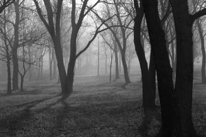 EERIE FOREST by ctjohnson58