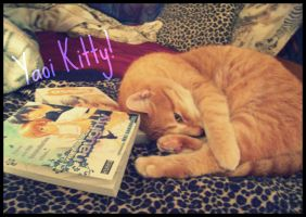 Scotty, The Yaoi Kitty by Isika
