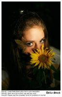 In The Sunflowers.5 by Della-Stock
