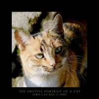 The Emotive Portrait Of A Cat by kharax