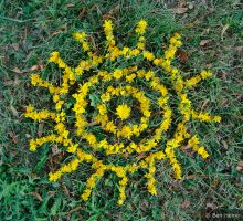 Abstract Compo - Yellow Flower by BenHeine