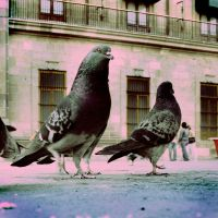 In The Pigeons Dream by Madhorse5